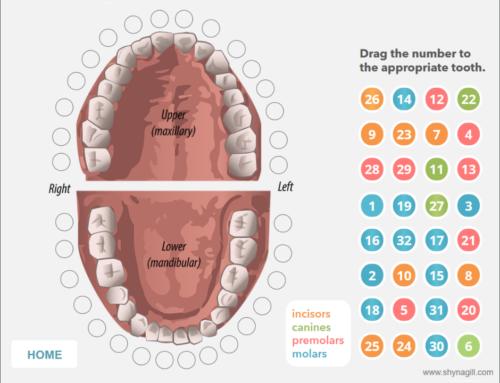 Articulate Storyline Dental Interaction